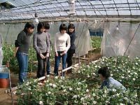 温室の中で、フラワーアレンジメントに使う花を自ら切ってきます。