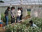 フラワーアレンジメント(切り花)(約2時間)